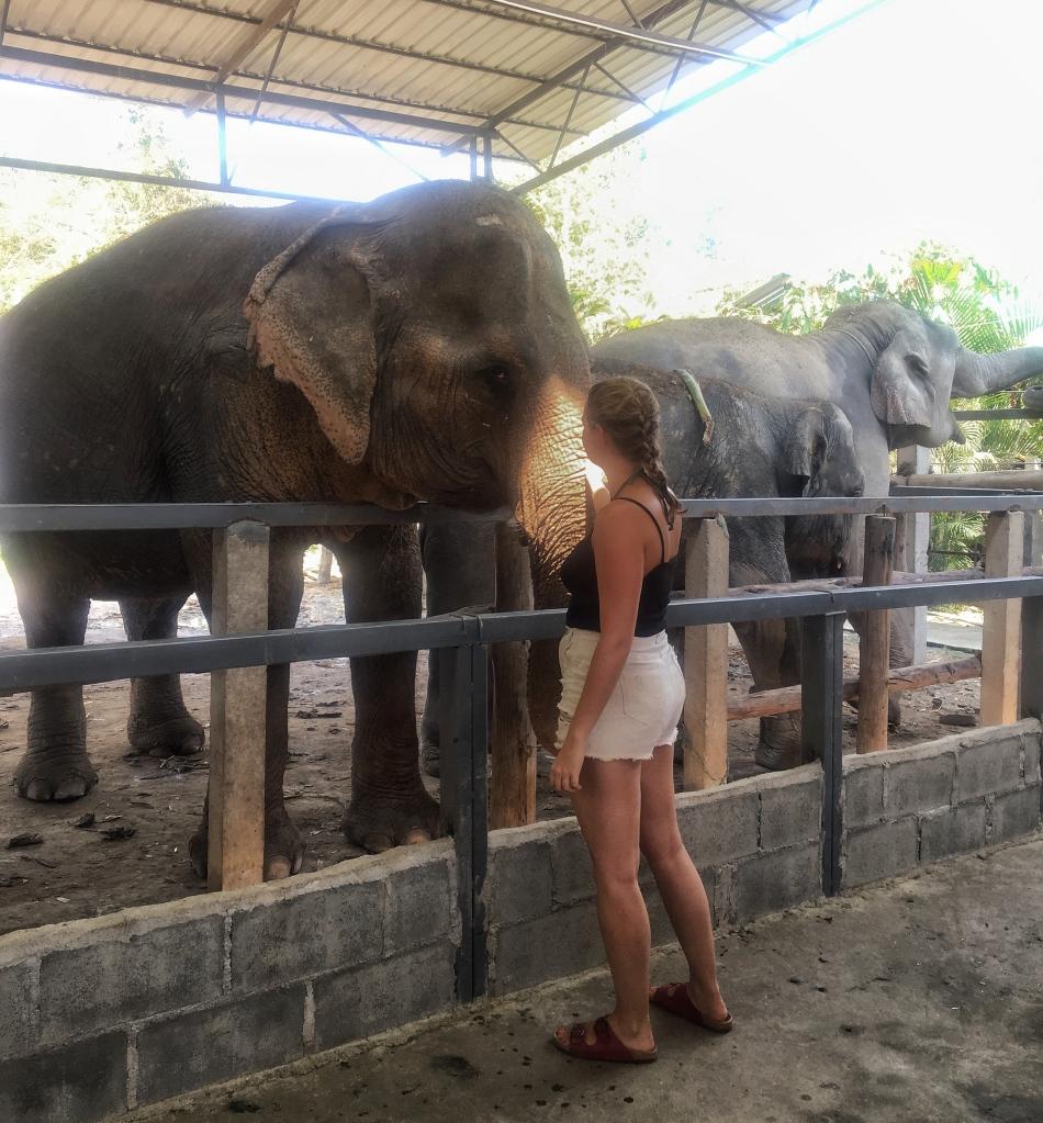 Woman stroking an asian elephant