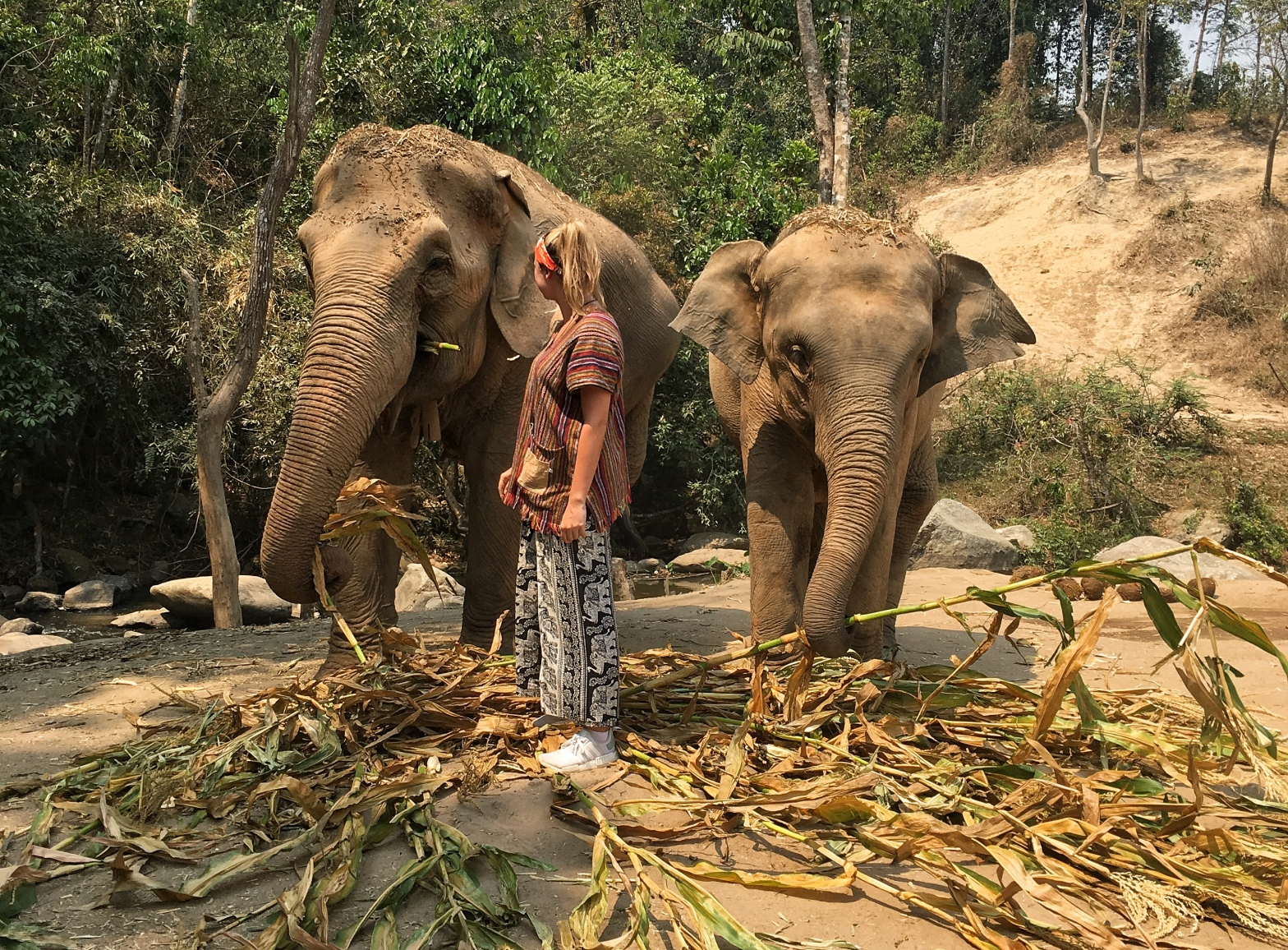Woman looking back at two asian elephants