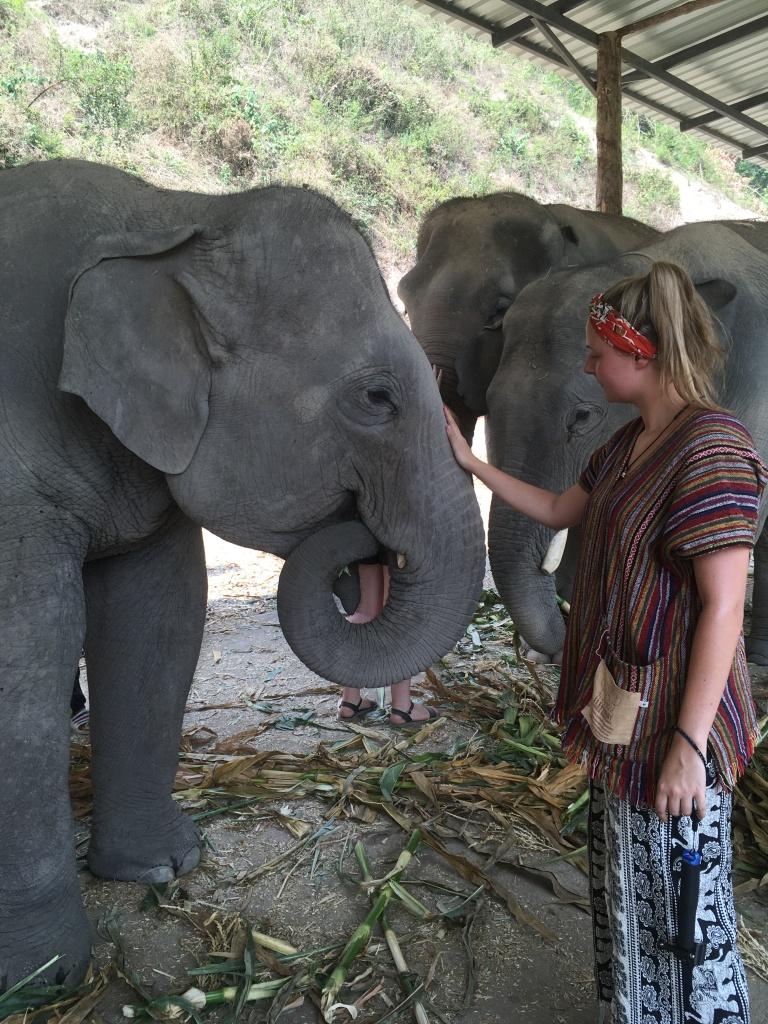 Woman stroking grey asian elephant