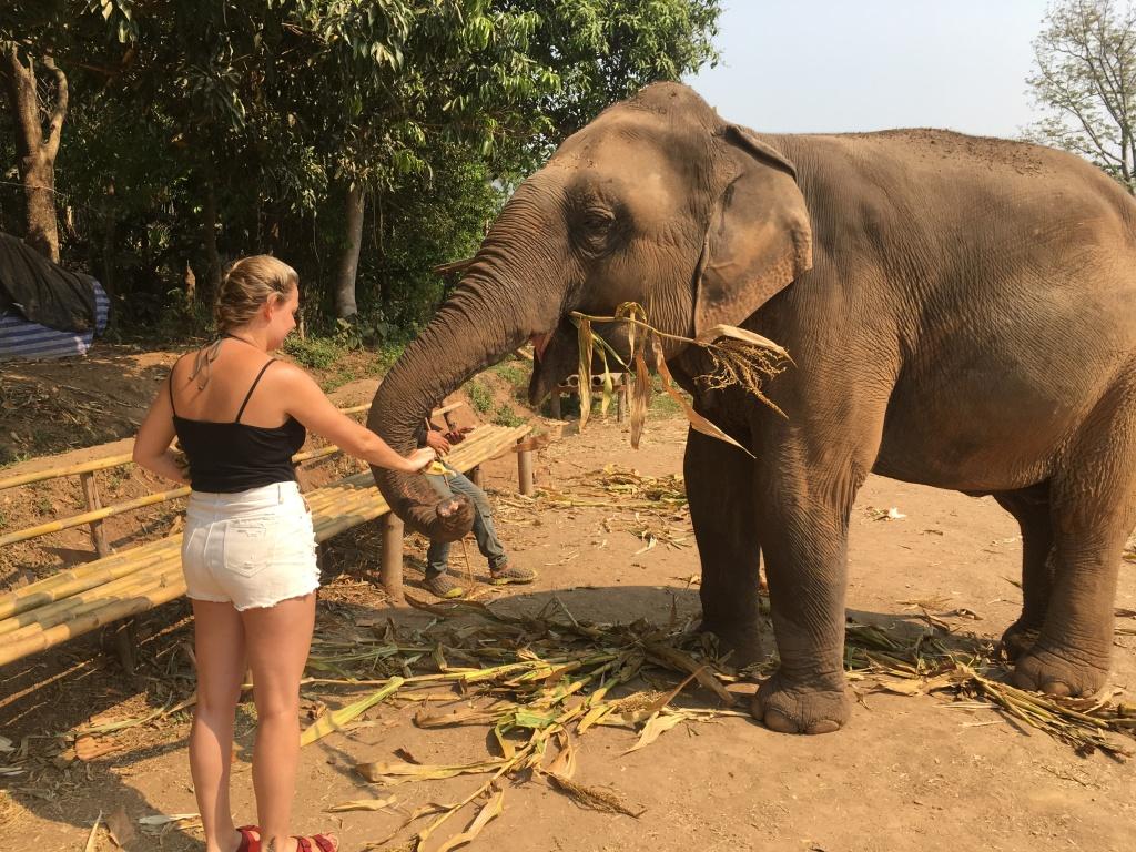Woman feeding asian elephant